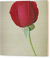 Red Rose On White Wood Print by Sandy Keeton
