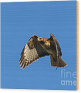 Red-tail Hover Wood Print by Mike  Dawson
