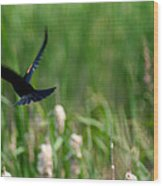 Red Winged Blackbird Wood Print by Andrew Lahay