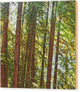 Redwood Wall Mural Panel 1 Wood Print by Artist and Photographer Laura Wrede