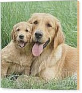Relaxing Retrievers Wood Print by Greg Cuddiford