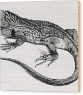 Reptile Wood Print by English School