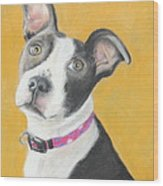 Rescued Pit Bull Wood Print by Jeanne Fischer