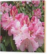 Rhododendron Garden Art Prints Pink Rhodie Flowers Wood Print by Baslee Troutman