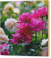 Rittenhouse Square Roses Wood Print by Rona Black