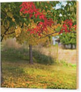 Riverbend Orchard Wood Print by Theresa Tahara
