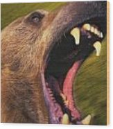 Roaring Grizzly Bears Face Rocky Wood Print by Thomas Kitchin & Victoria Hurst
