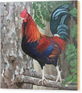Roscoe The Rooster Wood Print by Sandra Chase