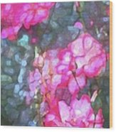 Rose 188 Wood Print by Pamela Cooper