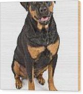 Rottweiler Dog With Drool Wood Print by Susan Schmitz