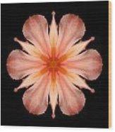 Salmon Daylily I Flower Mandala Wood Print by David J Bookbinder