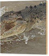 Saltwater Crocodile Wood Print by Bob Christopher