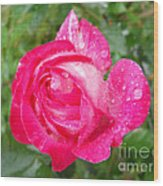 Scented Rose Wood Print by Ramona Matei
