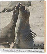 Sea Lion Love From The Book My Ocean Contact Laura Wrede To Purchase This Print Wood Print by Artist and Photographer Laura Wrede