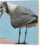 Seagull On The Rail Wood Print by Randall Weidner