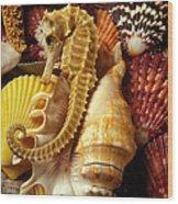Seahorse Among Sea Shells Wood Print by Garry Gay