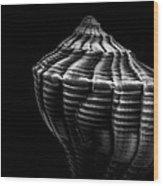 Seashell On Black Wood Print by Bob Orsillo