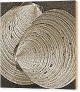 Seashells Spectacular No 11 Wood Print by Ben and Raisa Gertsberg