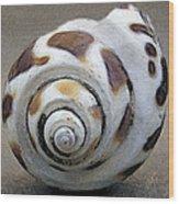 Seashells Spectacular No 2 Wood Print by Ben and Raisa Gertsberg