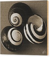 Seashells Spectacular No 27 Wood Print by Ben and Raisa Gertsberg