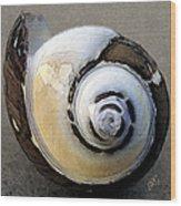 Seashells Spectacular No 3 Wood Print by Ben and Raisa Gertsberg