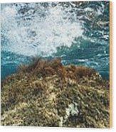 Seaweed Wood Print by Science Photo Library