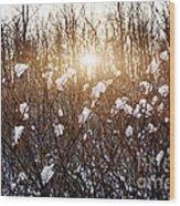 Setting Sun In Winter Forest Wood Print by Elena Elisseeva