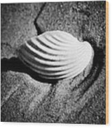 Shell On Sand Black And White Photo Wood Print by Raimond Klavins