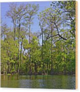 Silver River Florida Wood Print by Christine Till