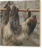 Sloth Wood Print by Ellen Henneke