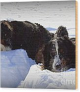 Snow Eaters Wood Print by Patti Whitten