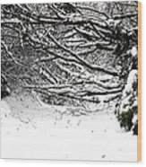 Snow Scene 5 Wood Print by Patrick J Murphy