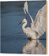 Snowy Egret Frolicking In The Water Wood Print by Andres Leon