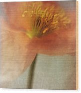 Soulful Poppy Wood Print by Priska Wettstein