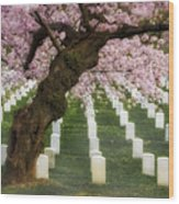 Spring Arives At Arlington National Cemetery Wood Print by Susan Candelario