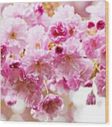 Spring Cherry Blossoms  Wood Print by Elena Elisseeva