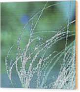 Spring Grass Wood Print by Artist and Photographer Laura Wrede