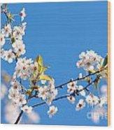 Spring Tree Wood Print by Michal Bednarek