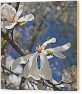 Spring Trees 1 Wood Print by Allan Morrison