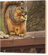 Squirrel Eating A Peanut Wood Print by  Onyonet  Photo Studios