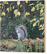 Squirrel Perched Wood Print by Matt Malloy