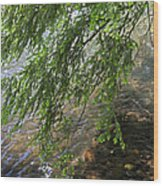 Stalking Trout Wood Print by John Stephens