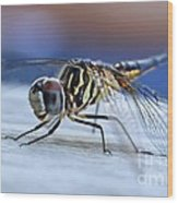 Stop By Tiger Dragon Fly Wood Print by Peggy  Franz