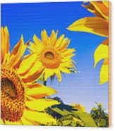Summertime Sunflowers Wood Print by Bob Orsillo