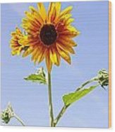 Sunflower In The Sky Wood Print by Kerri Mortenson