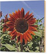 Sunflower Sky Wood Print by Kerri Mortenson