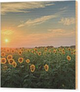 Sunflower Sundown Wood Print by Bill Wakeley