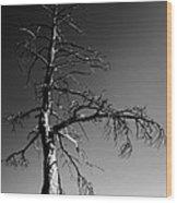 Survival Tree Wood Print by Chad Dutson