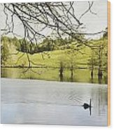 Swan Wood Print by Les Cunliffe