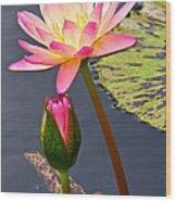 Tall Waterlily Beauty Wood Print by Byron Varvarigos